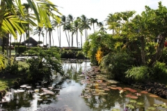 Tranquil Koi Pond at Papakea